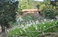 organic-garden-617-x-410