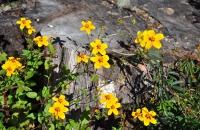 wild-flowers-617-x-410